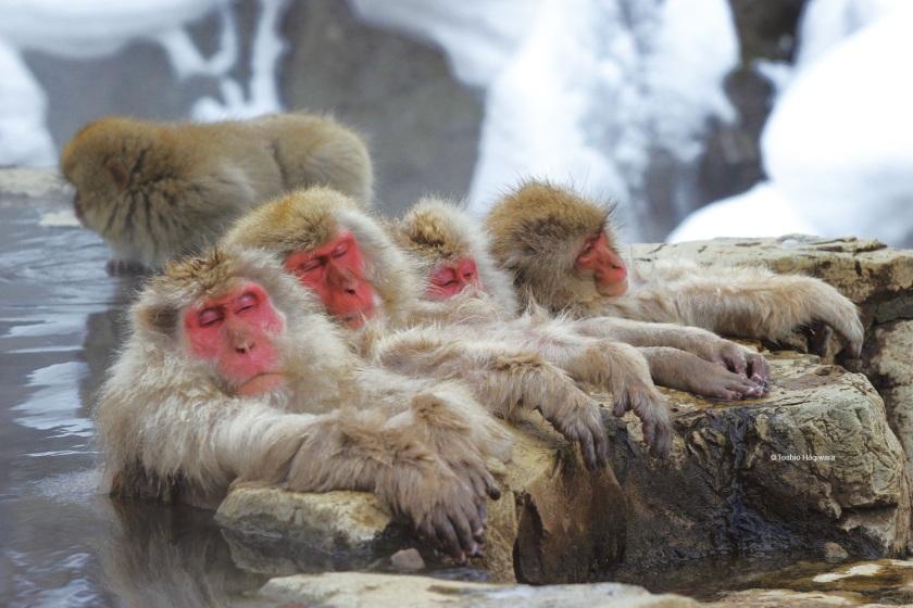w_snow_monkey_tour