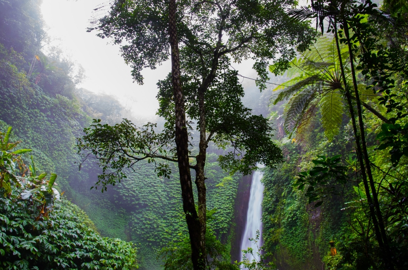nature-forest-waterfall-jungle