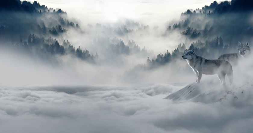 wolf-wolves-snow-wolf-landscape-89773