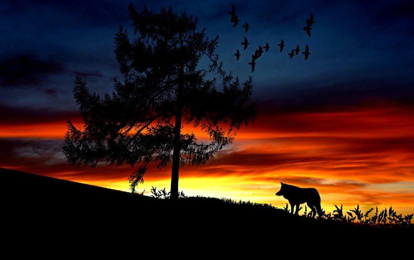 afterglow-animal-backlit-247583