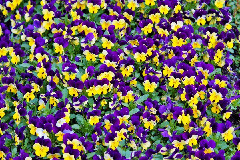 beautiful-bloom-blooming-414694