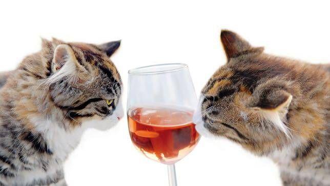 cats wine.jpg.653x0_q80_crop-smart