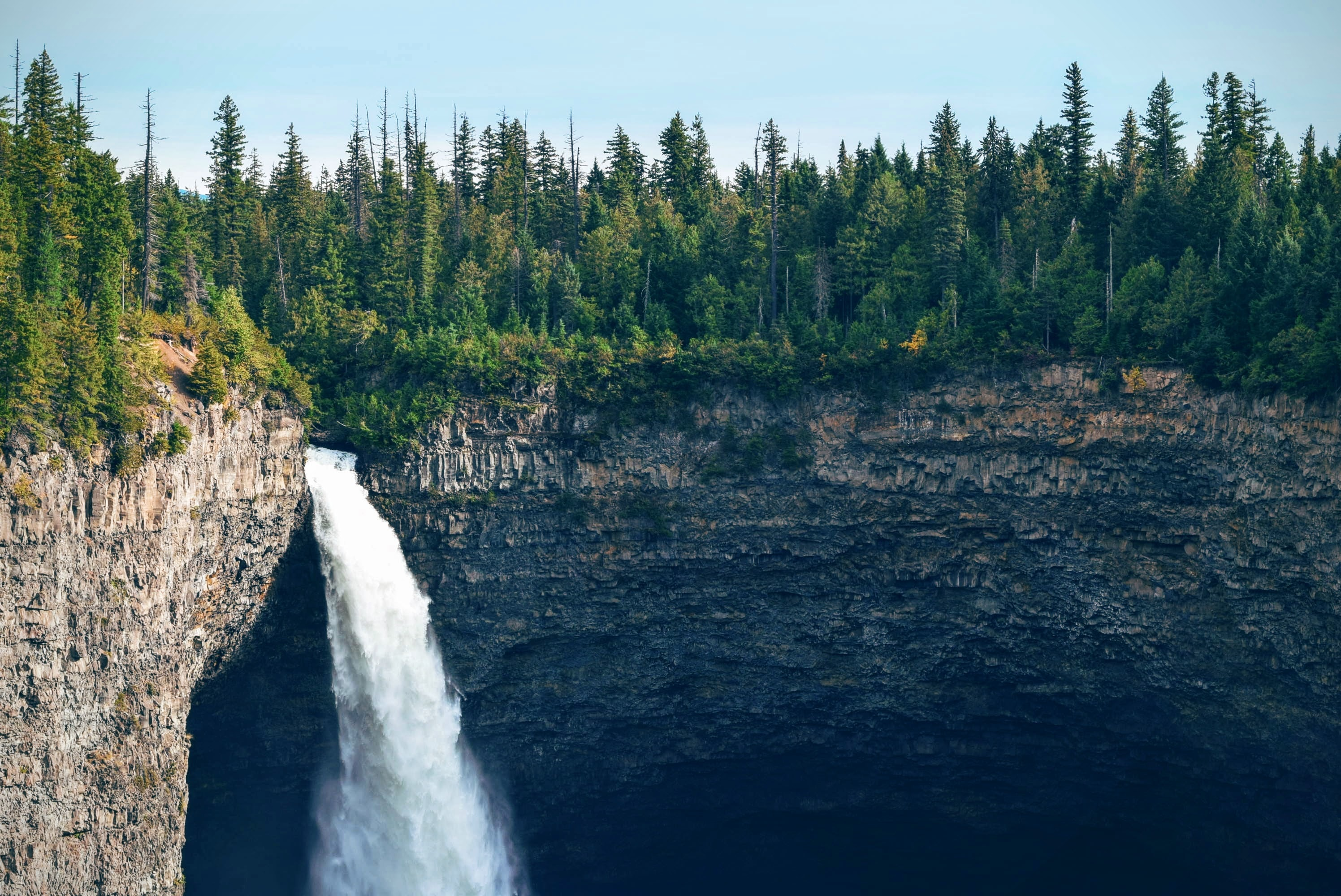 cliff-fir-trees-nature-70219