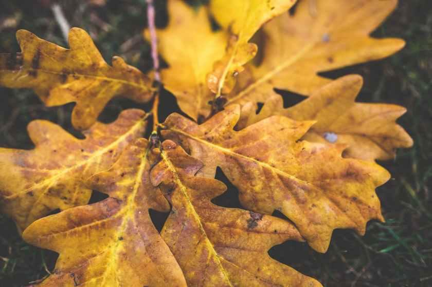 yellow-leaf-leaves-autumn