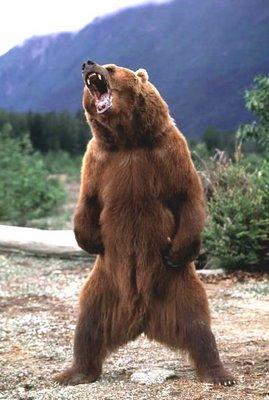 bear-roar