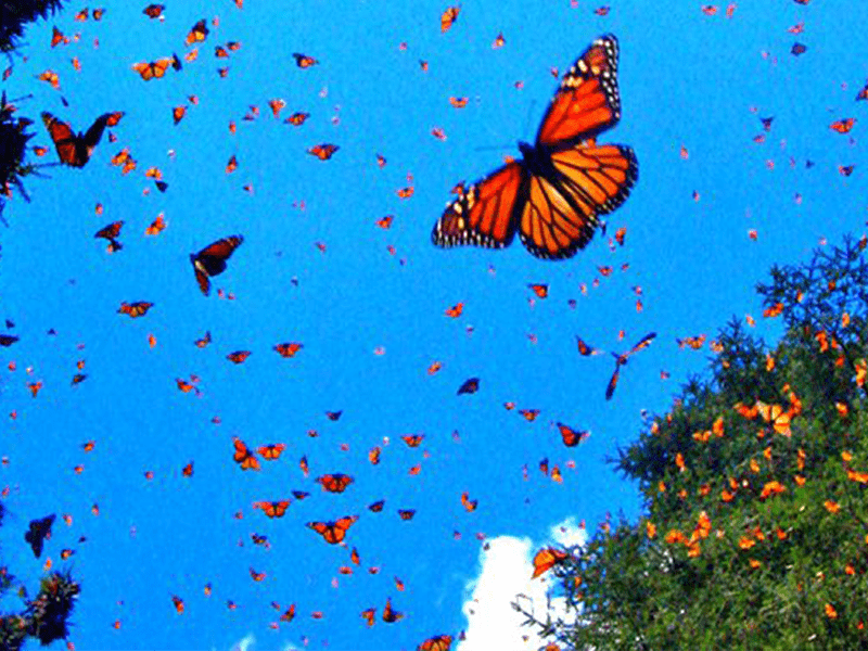 monarch-butterfly-tours-mexico-2