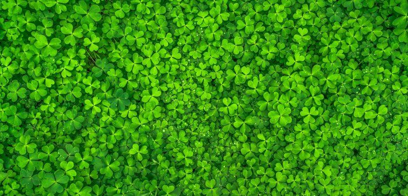 clover-clovers-green-158780