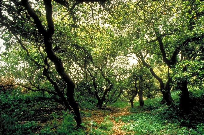 ecology1oak-grove-in-gg-park1