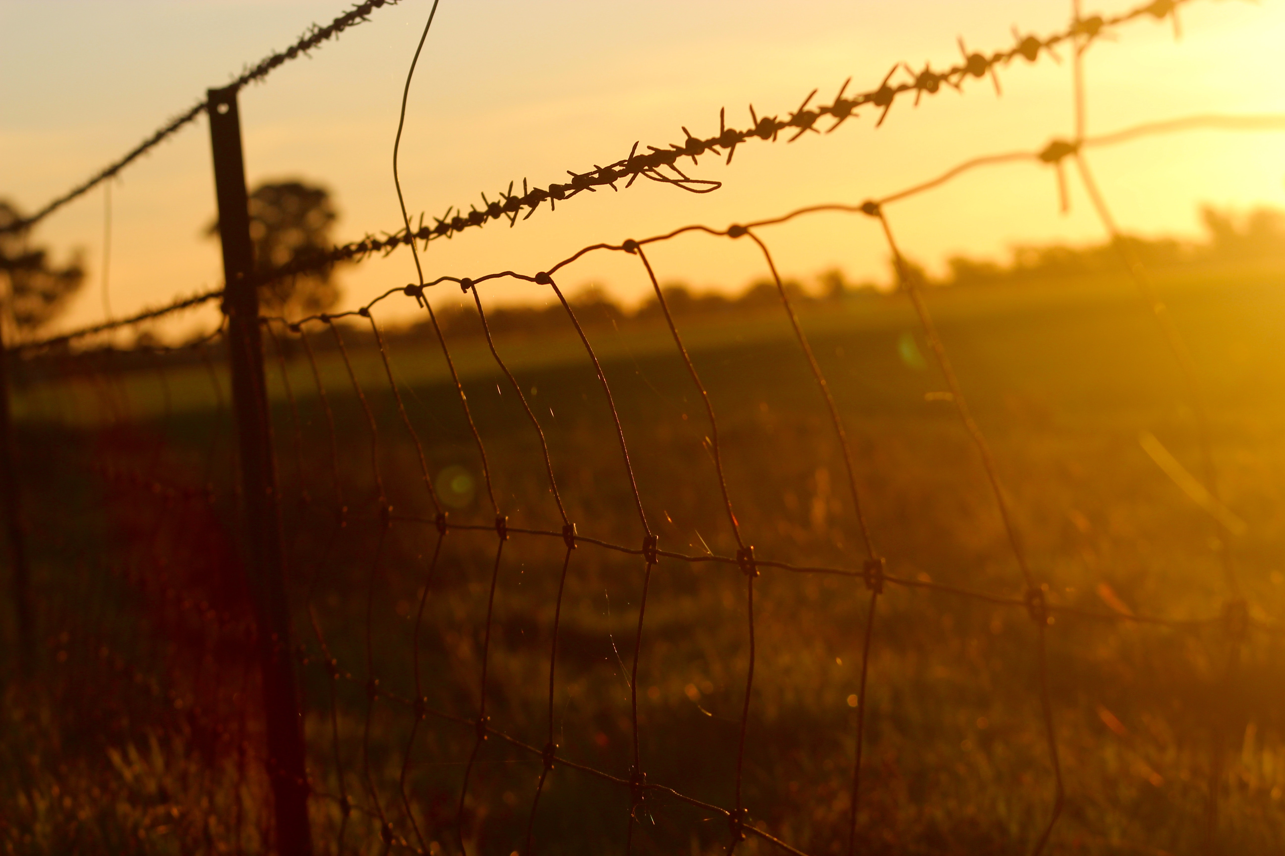 barbed-wire-fence-wire-mesh-110649