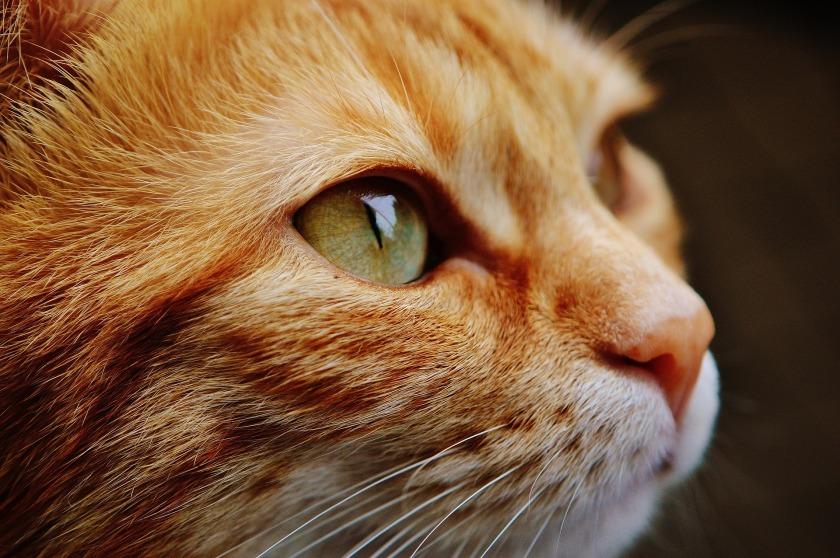 cat-1455468_1920