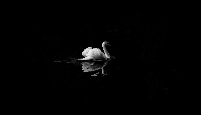 animal-1868697_1920