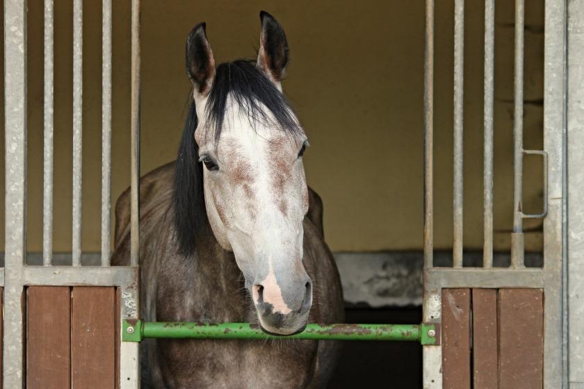 horse-2756293_1920