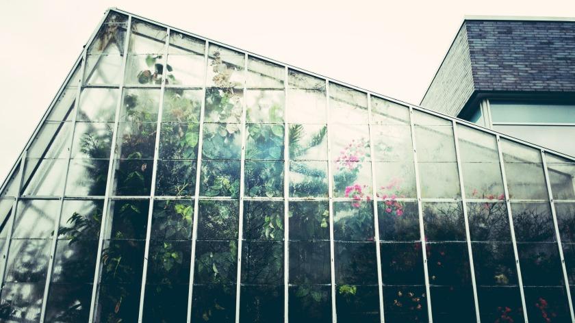 greenhouse-1246536_1920