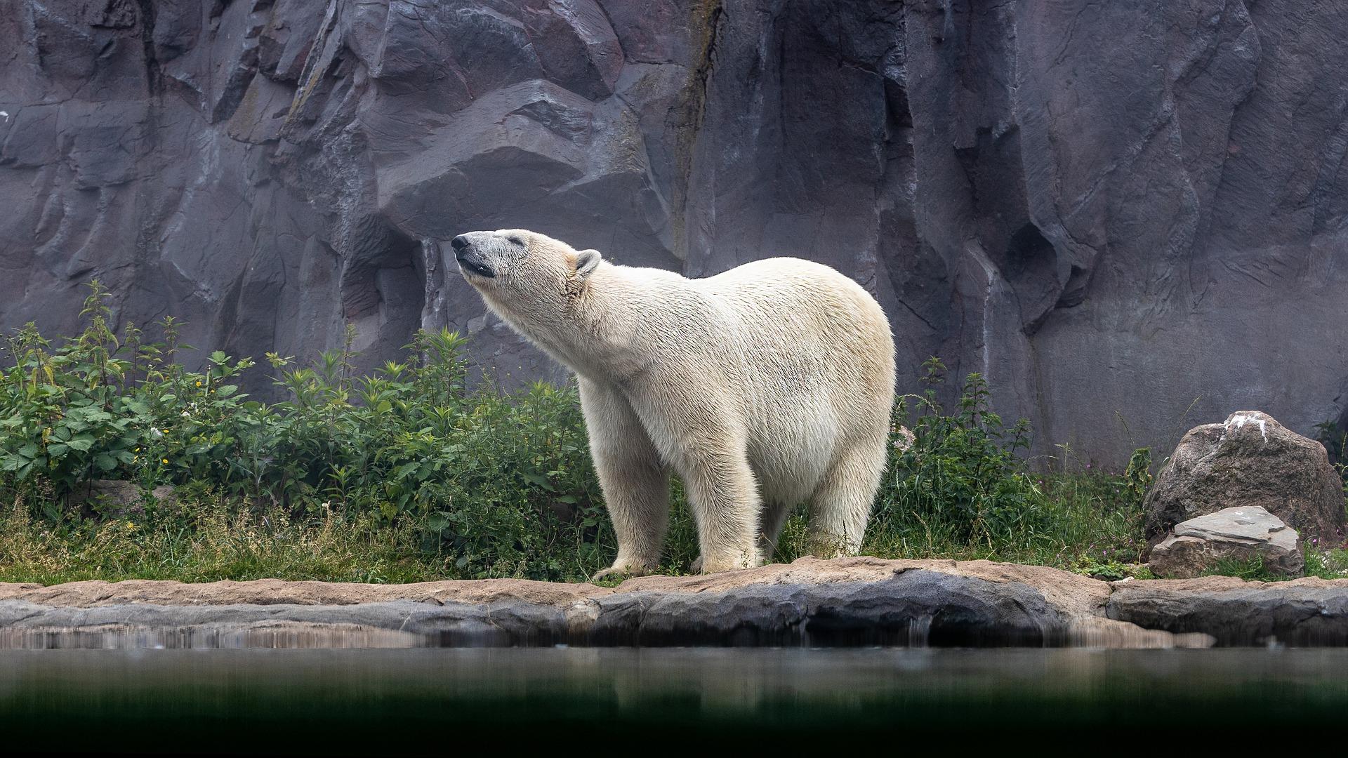 bear-5301013_1920